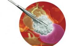 Helitene Absorbable Collagen Hemostat